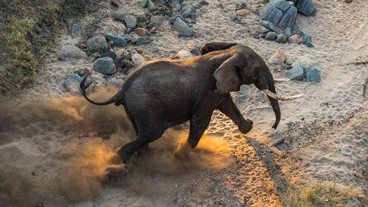 Imágenes de la reubicación de 500 elefantes en Malaui