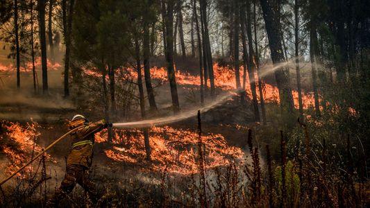 ¿Qué pueden enseñarnos los «megaincendios» de Portugal sobre el futuro de nuestros bosques?