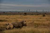 Rinoceronte en Nairobi