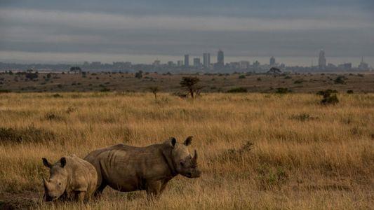 La controvertida vía férrea de Kenia: una amenaza para la vida en los parques naturales