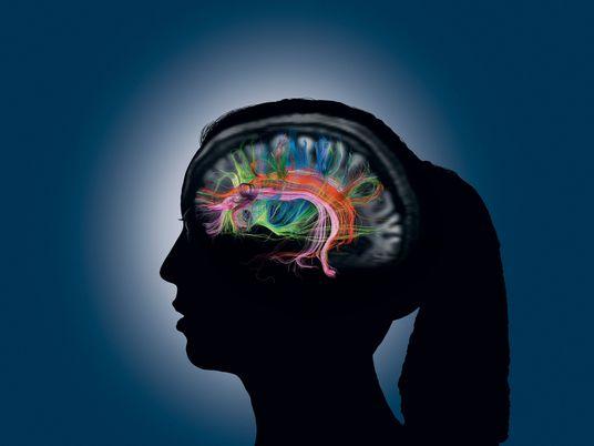 La memoria humana: ¿cómo creamos, rememoramos y olvidamos recuerdos?