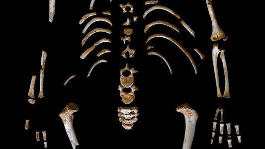 Descubierto en Asturias el esqueleto de un niño neandertal