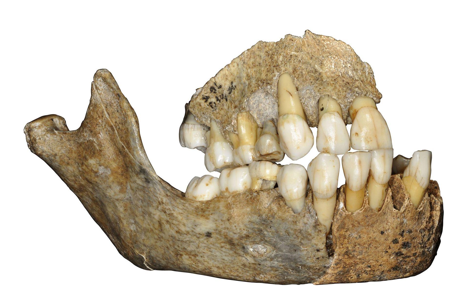 Mandíbula neandertal