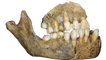 El ADN prehistórico añade nuevos giros a la historia de la migración neandertal
