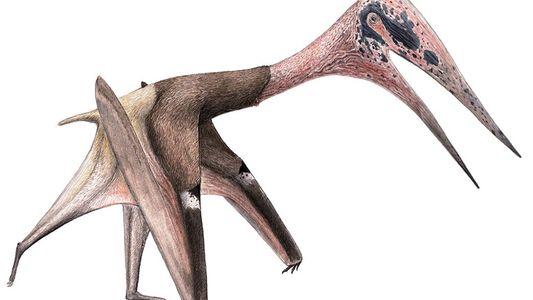 Hallado en Mongolia uno de los pterosaurios más grandes conocidos hasta la fecha