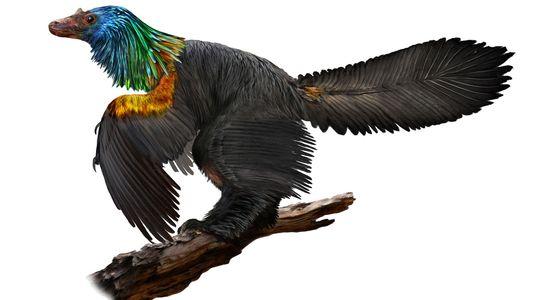Este nuevo dinosaurio podría haber tenido plumas con los colores del arcoíris