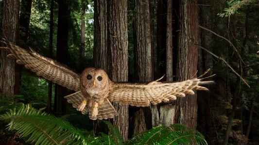 Nuestras fotografías favoritas de animales salvajes sacadas con cámaras trampa