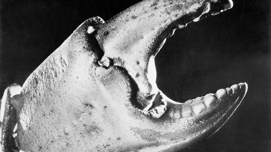 Mágicas fotografías de criaturas marinas sacadas en los años 20 y 30