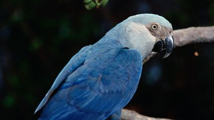 Ocho especies de aves que han desaparecido en esta década