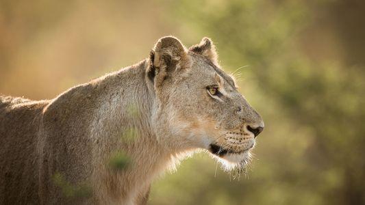 Más de un millón de especies se encuentran en riesgo de extinción