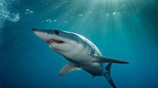 Seis tiburones extraordinarios de los que quizá nunca hayas oído hablar