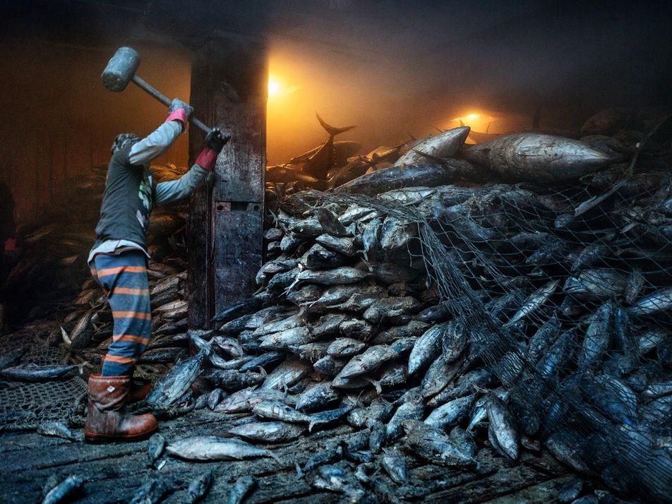 Las poblaciones de peces se agotan pese a las promesas de varios países para frenar la ...