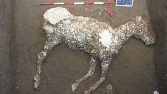 Los caballos hallados en Pompeya podrían haber estado preparados para huir de la erupción