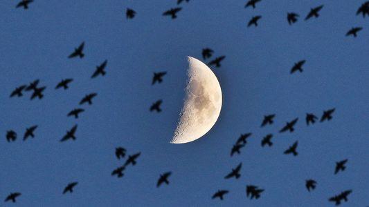 Fotografías de la Luna