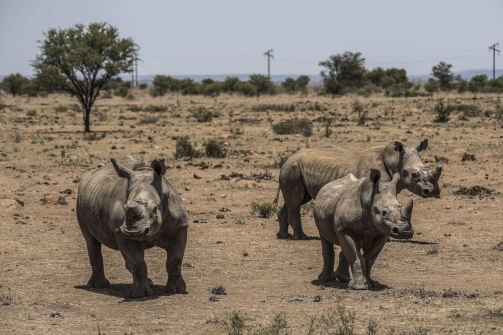 Prohibición del comercio de cuerno de rinoceronte.