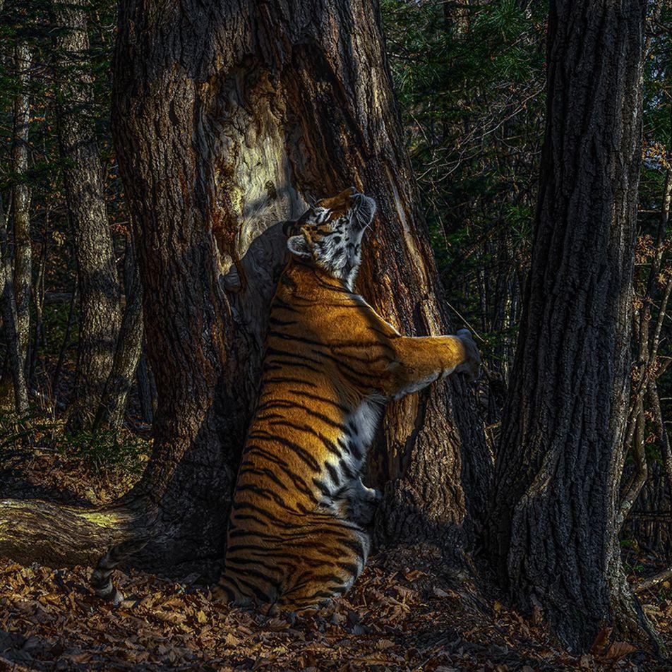 Estas son las mejores fotografías de fauna salvaje del 2020