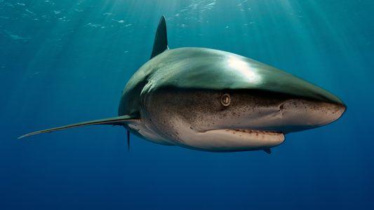 Una fotografía revela que este tiburón luchó contra un calamar gigante