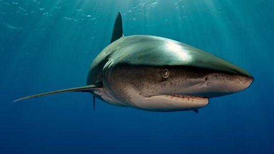 Tiburones 101