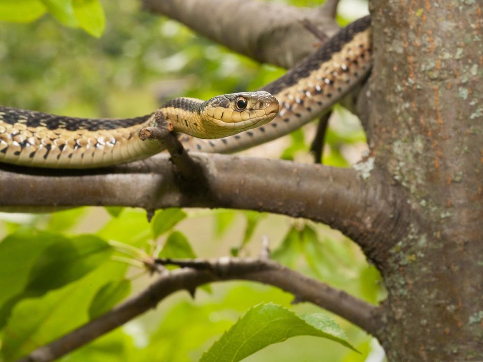Las serpientes también tienen amigos