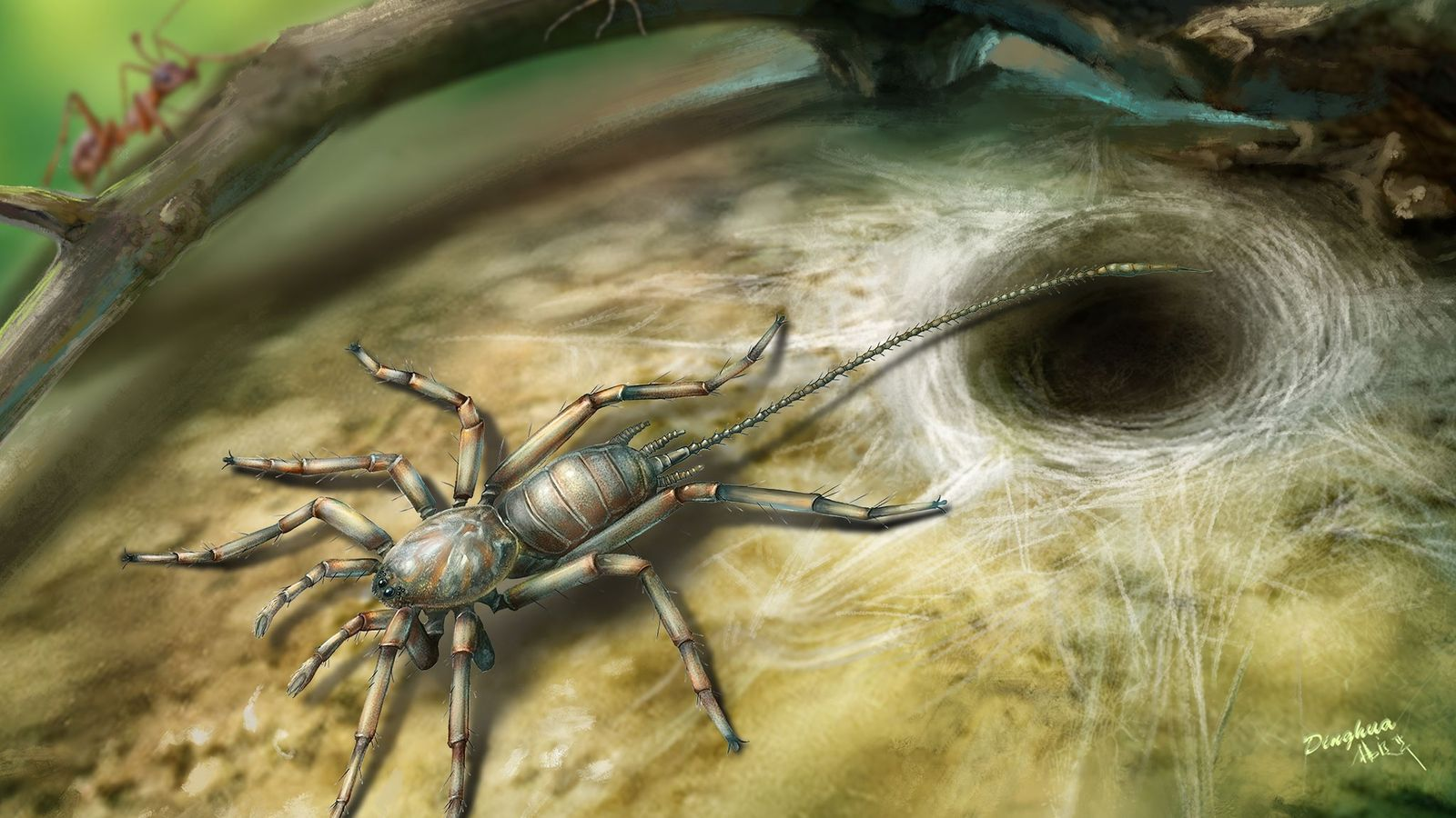 Araña con cola