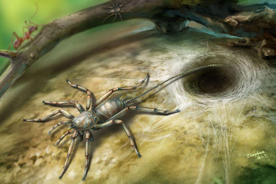 Paul Selden, investigador de la Universidad de Kansas, explicó que el arácnido primitivo probablemente empleaba su ...
