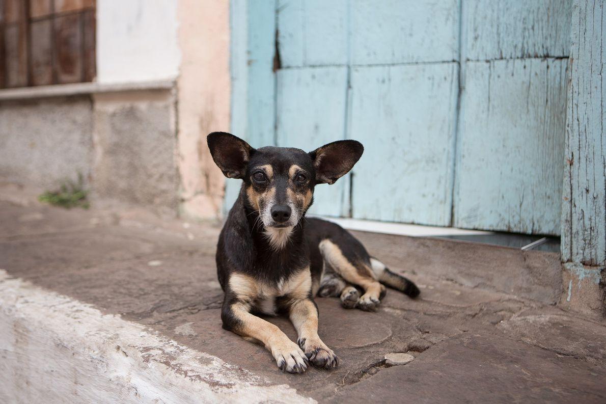 Los perros callejeros tienen la capacidad natural de entender los gestos humanos