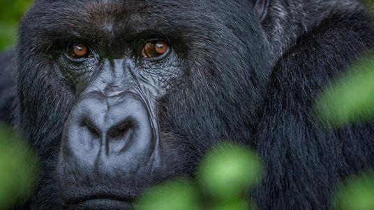 Los fotógrafos de Nat Geo recuerdan sus fotos favoritas de especies amenazadas