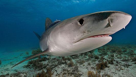 Las probabilidades de que te muerda un tiburón, un oso y una serpiente son de una ...