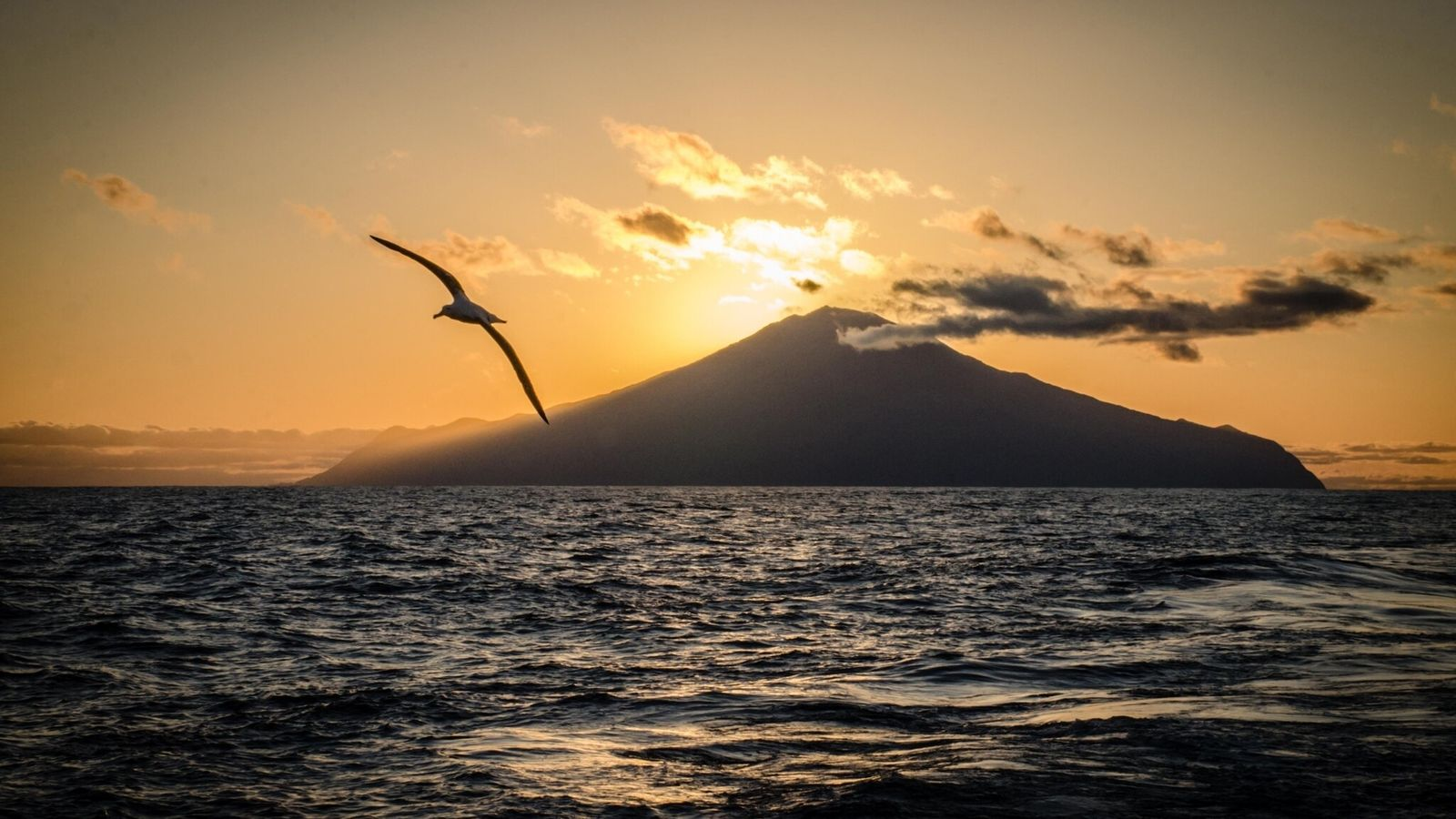 Un ave marina sobrevuela la isla de Tristán de Acuña