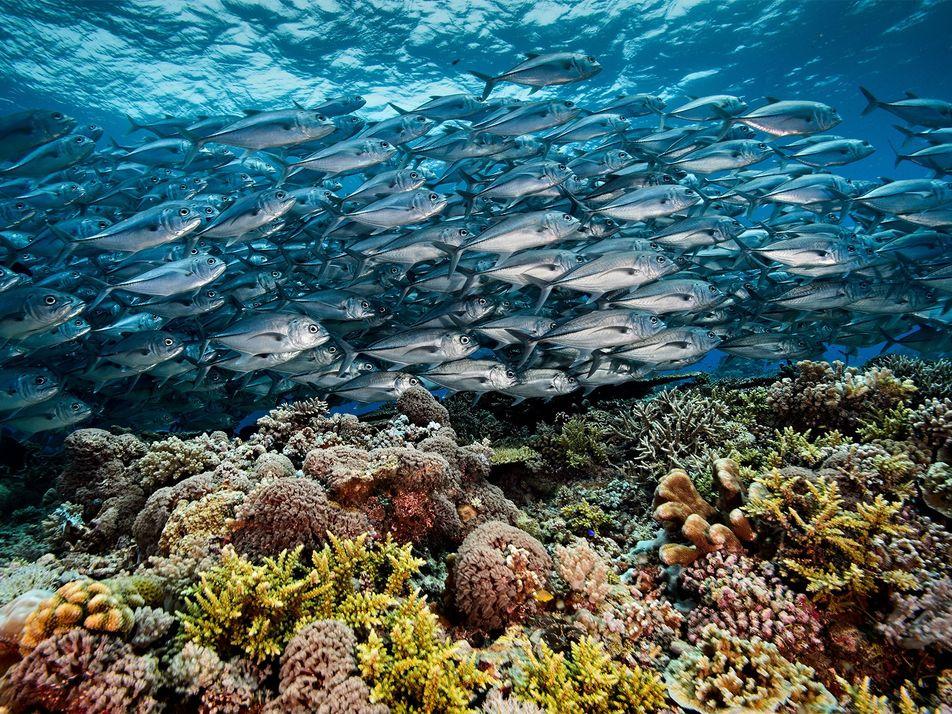 ¿Por qué el arrecife filipino de Tubbataha se ha mantenido prístino? Todas las claves sobre su ...
