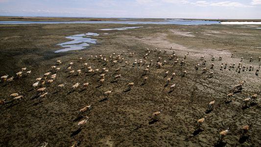 El derretimiento del permafrost del Ártico podría liberar toneladas de mercurio tóxico