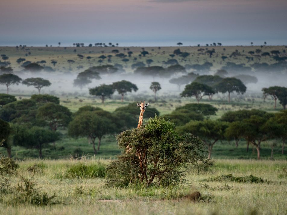 La pandemia impulsa el aumento de la caza furtiva en Uganda