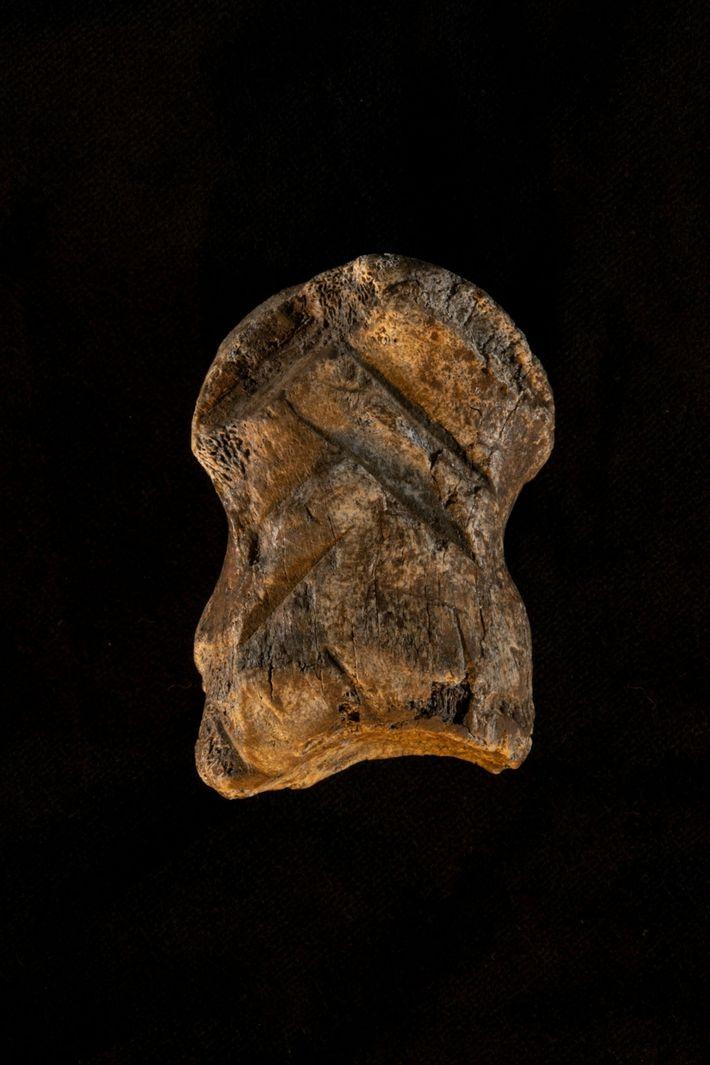 Una perspectiva frontal del hueso de la cueva del Unicornio