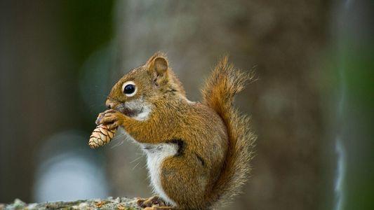 Estos animales convierten hábitats humanos en hogares y despensas