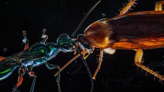 La cucaracha karateka y otros animales duros de pelar