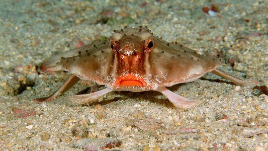 Por qué a algunos peces se les da tan mal nadar
