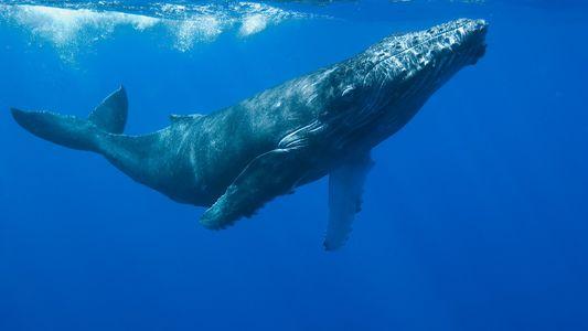 La supervivencia de las ballenas en aguas españolas, en grave riesgo por el cambio climático