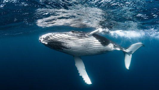 ¿Cuánto valen los servicios ecosistémicos de una ballena?