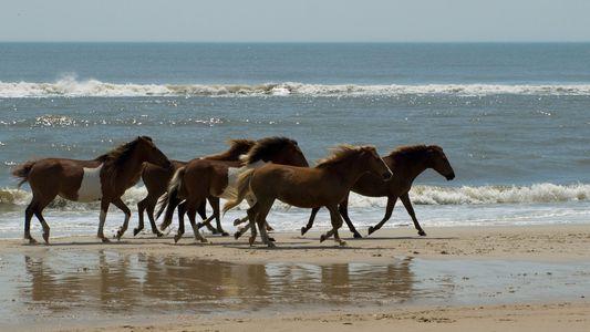 El ADN prueba que los caballos salvajes ya no existen