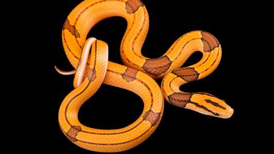 El mundo de las serpientes