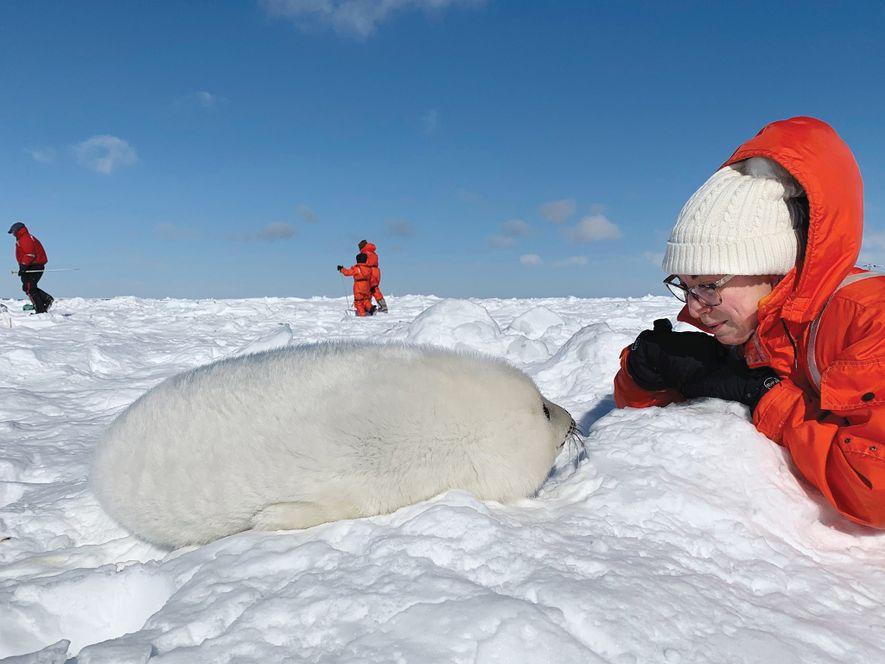 Una mujer y una foca de pelo blanco se miran fijamente en el hielo. Los visitantes ...