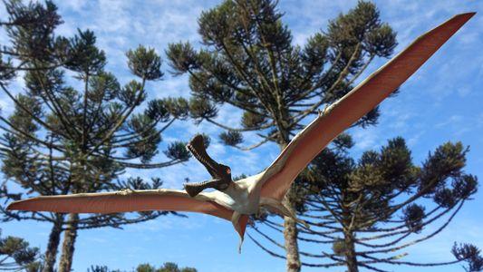 Descubren en Australia una nueva especie de pterosaurio: el «dragón de hierro»