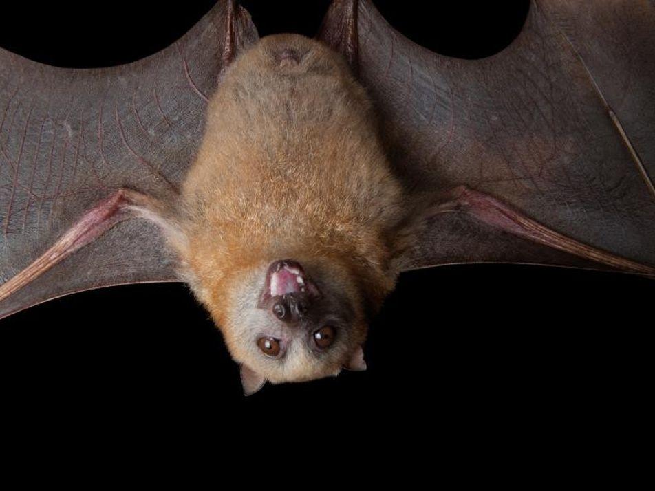 Gatos, ratas, murciélagos y mucho más: esta es la historia de los animales de Halloween
