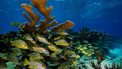 Las joyas subacuáticas de Cuba tendrán que enfrentarse a la realidad del turismo