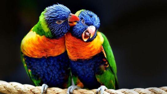 «Aves de Australia»– Jongsung Ryu