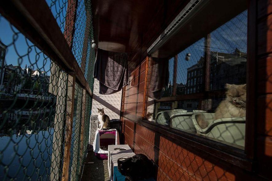 Borre, a la izquierda, un macho de 9 años, disfruta del sol en el Barco de ...