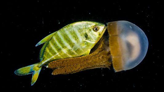 Conoce el universo nocturno de estas criaturas marinas