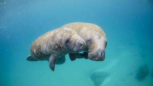 Los animales más lentos del mundo: ¿adivinas qué animal se mueve a poco más de 1 ...