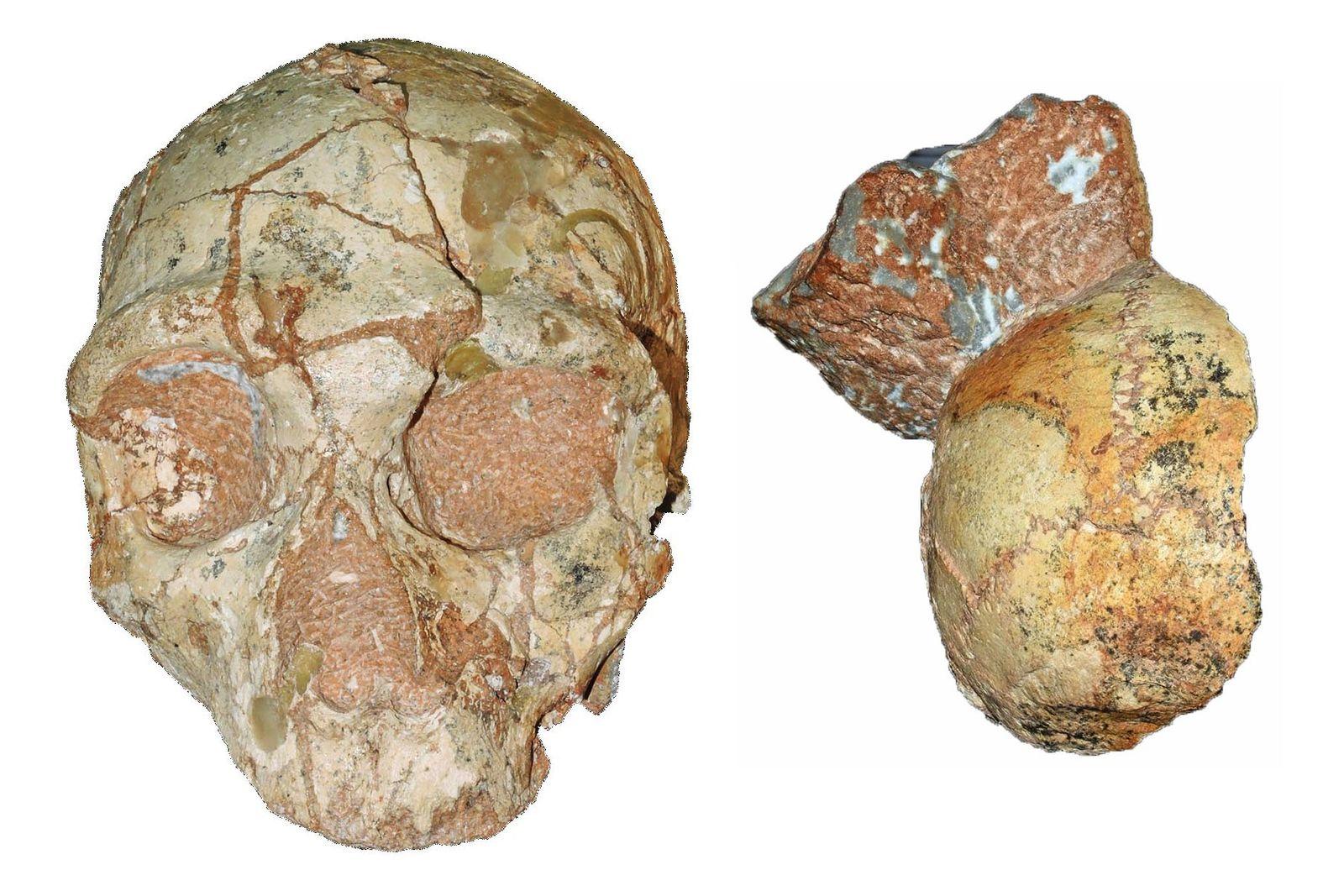 Fósiles de Apidima