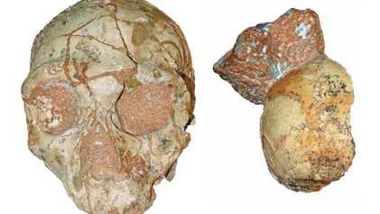 Estos podrían ser los restos de Homo sapiens más antiguos fuera de África, pero abundan las ...